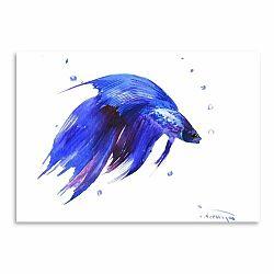 Plagát Betta Fish